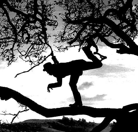 Tom+Waits+Tom_Waits_Tree